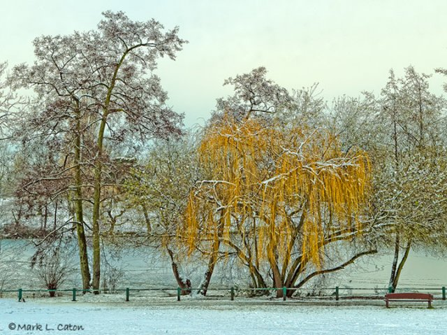 Winter Willow at Grovelands Park Lake